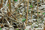 Title: The camouflaged Eastern Cottontail