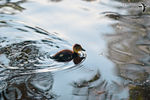 Title: #1100 - Duckling in the artistic blur