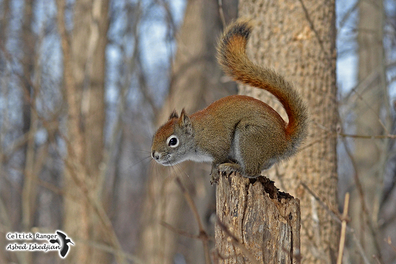 S like Squirrel