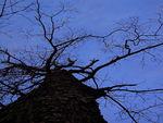 Title: blue sky and tree