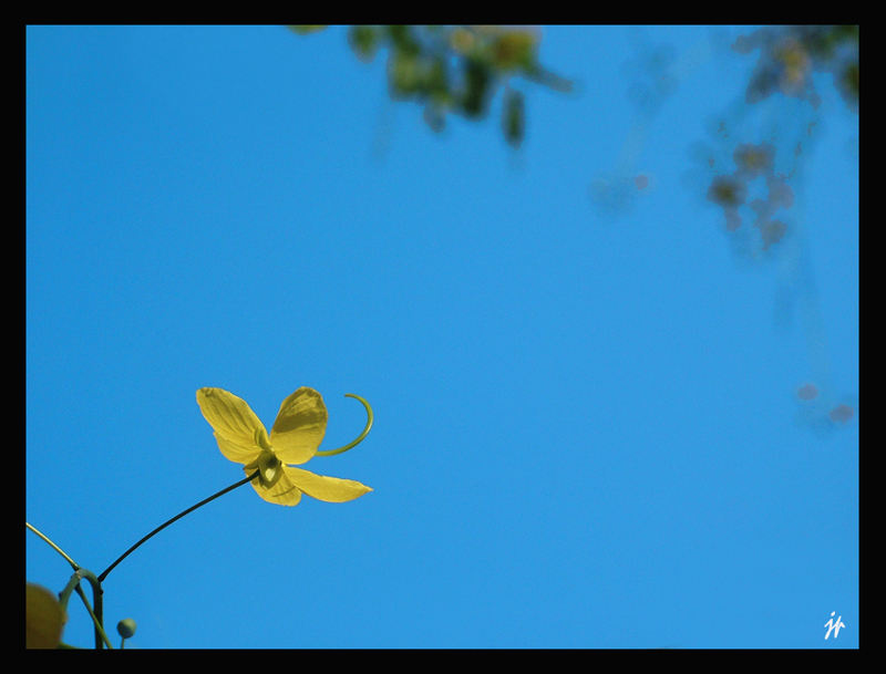 Yellow in Blue...