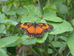 Title: Butterfly on the leavesCanon Powershot A 40