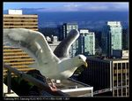 Title: the_gull_in_the_city