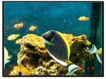 Title: tropical fish2
