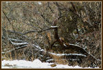 Title: Willow in Snow