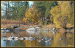 Title: Granite Lake and Geese
