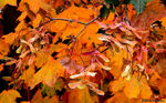 Title: Fall-Pacific NW WashingtonLeica D-LUX 2