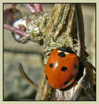 Title: A lay-by for ladybirds