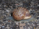 Title: snail on the road