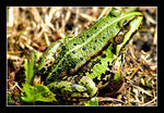Title: frog...