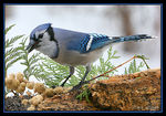 Title: Blue Jay Way Camera: Canon EOS 20D