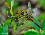 Title: �exuviae and dragonfly��