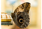 Title: �owl butterfly for Jesus��